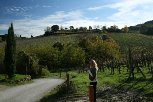 We sampled some of the grapes on our walk.  They tasted fantastic.  These are vineyards in the Chianti region.